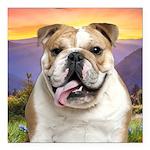 Bulldog Meadow Square Car Magnet 3