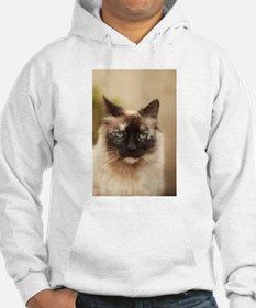 Colorpoint cat up close Sweatshirt