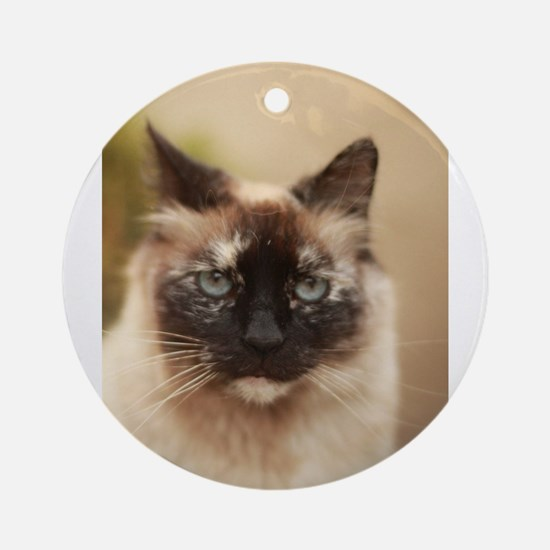 Colorpoint cat up close Round Ornament