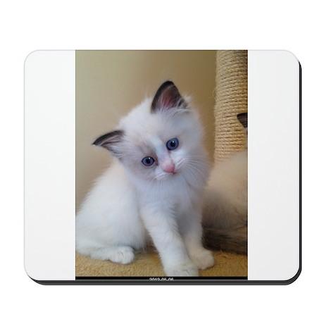 Ragalicious Ragdoll Kitten Mousepad