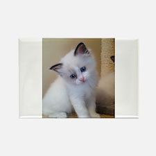 Ragalicious Ragdoll Kitten Rectangle Magnet