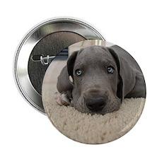 """Cute Great dane 2.25"""" Button (10 pack)"""