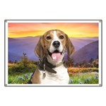 Beagle Meadow Banner