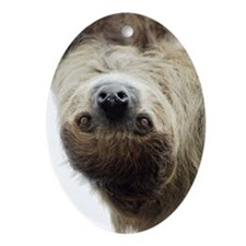 Sloth Ornament (Oval)