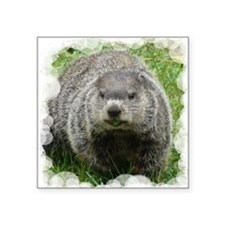 Groundhog eating Sticker