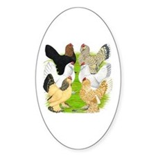 Six DUccle Hens Decal