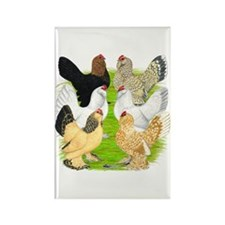 Six DUccle Hens Rectangle Magnet