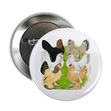 "Six DUccle Hens 2.25"" Button"