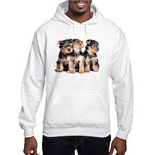 Yorkie Puppies Hoodie