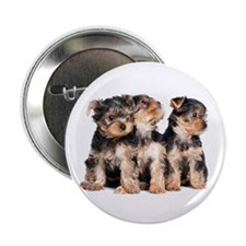 "Yorkie Puppies 2.25"" Button (10 pack)"