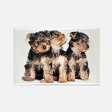 Yorkie Puppies Rectangle Magnet (100 pack)