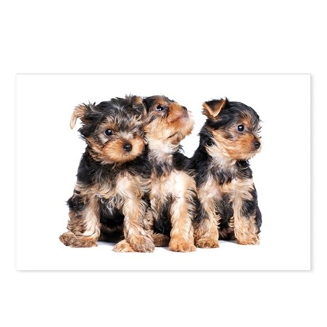 Yorkie Puppies Postcards (Package of 8)