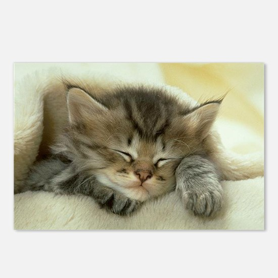 sleeping kitty Postcards (Package of 8)