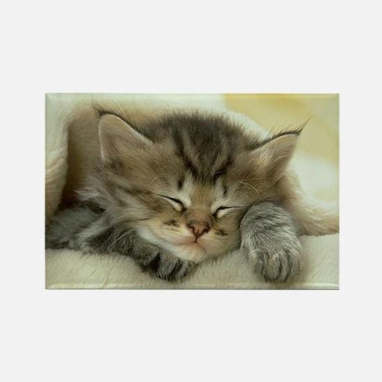 sleeping kitty Rectangle Magnet