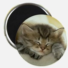 sleeping kitty Magnet