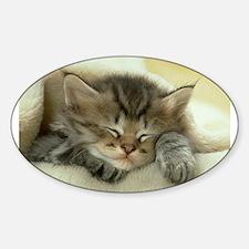 sleeping kitty Sticker (Oval)