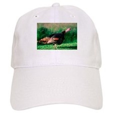 Wild Turkey Stare Baseball Cap