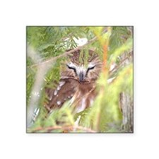 """Northern Saw-whet Owl hiding Square Sticker 3"""" x 3"""