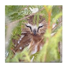 Northern Saw-whet Owl hiding Tile Coaster