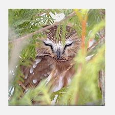 Northern Saw-whet Owl hiding Tile Coaster