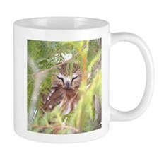 Northern Saw-whet Owl hiding Mug