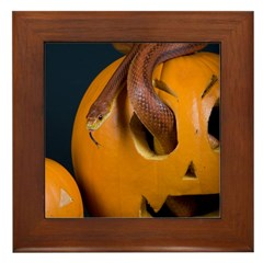 Snake In Pumpkin Framed Tile