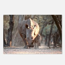 White rhinoceros mother and calf - Postcards