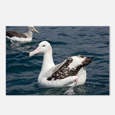 Wandering albatross - Postcards