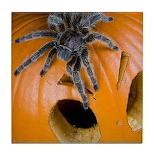 Tarantula on Pumpkin Tile Coaster