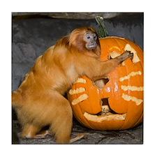 Tamarin With Pumpkin Tile Coaster