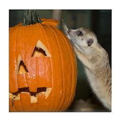 Meerkat On Pumpkin Tile Coaster