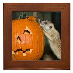 Meerkat On Pumpkin Framed Tile