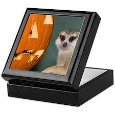 Meerkat Next to Pumpkin Keepsake Box