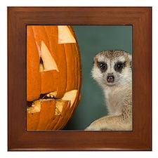 Meerkat Next to Pumpkin Framed Tile
