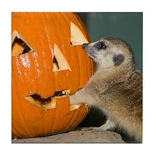 Meerkat Reaching into Pumpkin Tile Coaster