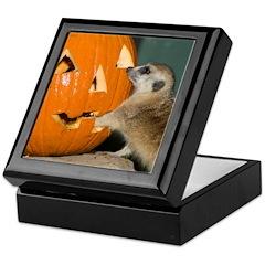 Meerkat Reaching into Pumpkin Keepsake Box