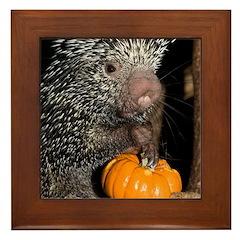 Porcupine Holding Mini Pumpkin Framed Tile