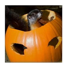 Squirrel in Pumpkin Tile Coaster