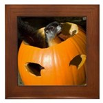 Squirrel in Pumpkin Framed Tile