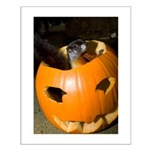 Squirrel in Pumpkin Small Poster