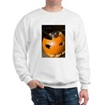 Squirrel in Pumpkin Sweatshirt