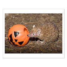 Lesser Tenrec with Pumpkin Small Poster