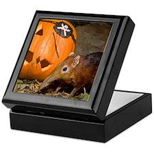 Elephant Shrew With Pumpkin Keepsake Box
