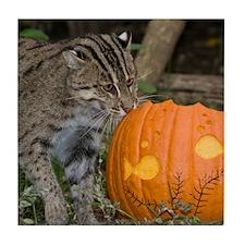 Ocelot With Pumpkin Tile Coaster