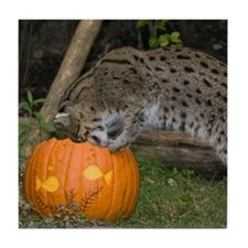 Ocelot Looking into Pumpkin Tile Coaster