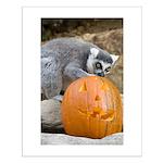 Lemur With Pumpkin Small Poster