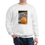 Lemur With Pumpkin Sweatshirt