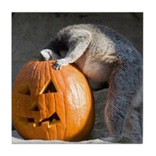 Lemur Looking into Pumpkin Tile Coaster