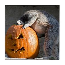 Lemur Looking into Pumpkin Tile Coaster