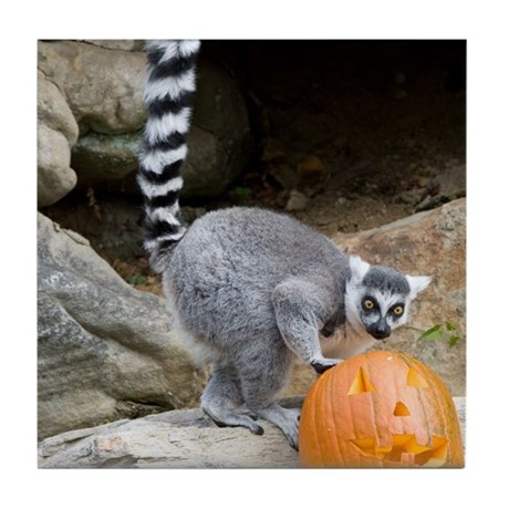 Lemur Pumpkin Tile Coaster